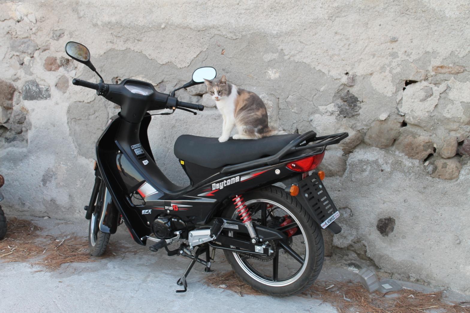 Pisica la Roma
