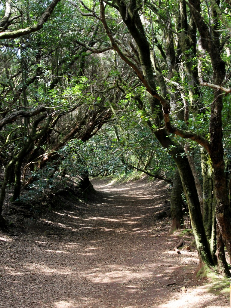 Pădure de lauri din Anaga