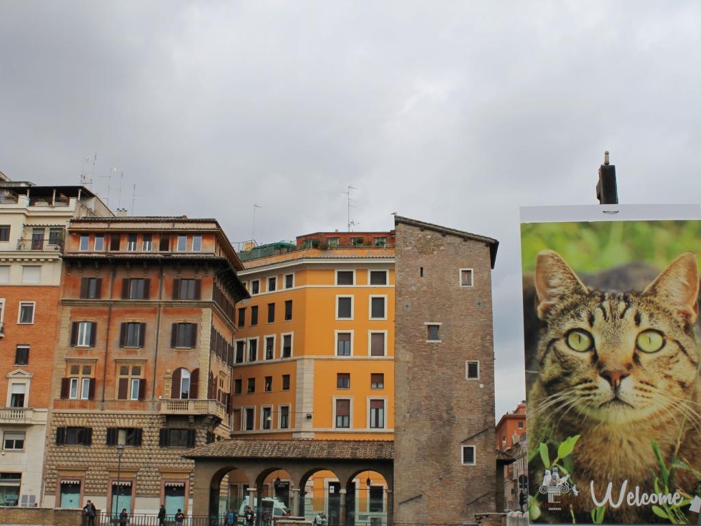 Sanctuarul de pisici